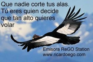 Condor-volando