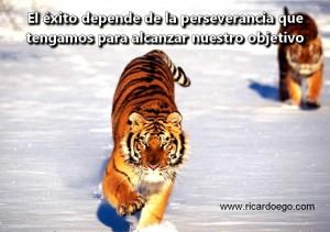 El-exito-depende-de-la-perseverancia-que-tengamos-para-alcanzar-nuestro-objetivo