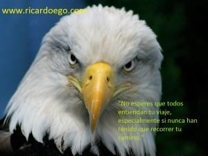 Mirada_de_Aguila-1024x768-145484
