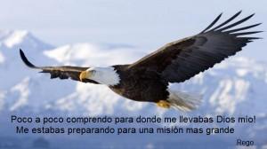 bald-eagle-600x337