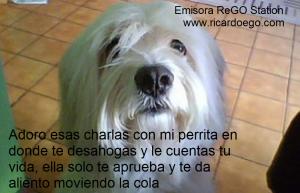 perro-pide-abrazo-1024x661