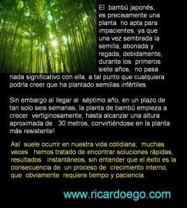 plantacion-bambu-151